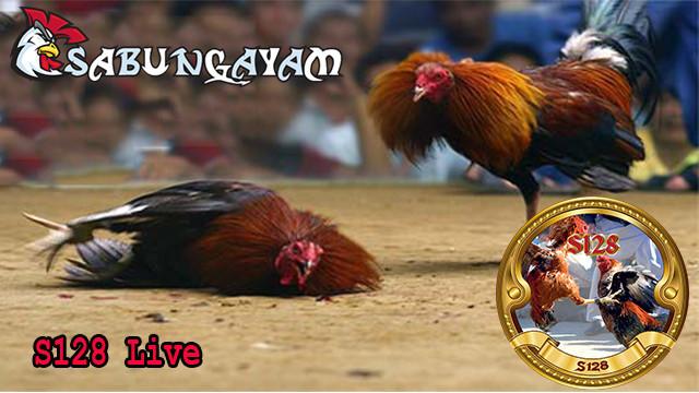 Keuntungan Bermain Permainan Sabung Ayam
